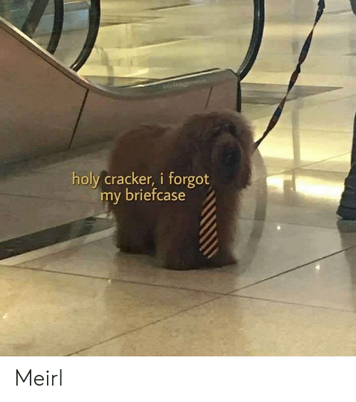 MeIRL, Cracker, and  Briefcase: ntinitedoggememes  holy cracker, i forgot  my briefcase Meirl