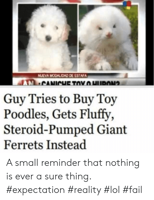 expectation: NUEVA MODALIDAD DE ESTAFA  CANICHE TOYHURON  Guy Tries to Buy Toy  Poodles, Gets Fluffy  Steroid-Pumped Giant  Ferrets Instead A small reminder that nothing is ever a sure thing. #expectation #reality #lol #fail