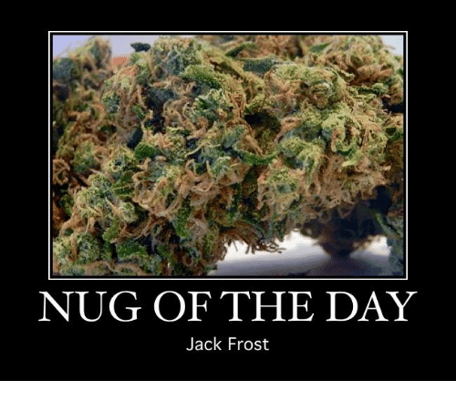 Jack Frost: NUG OF THE DAY  Jack Frost
