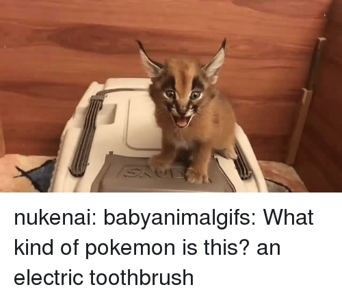 Pokemon, Tumblr, and Blog: nukenai:  babyanimalgifs: What kind of pokemon is this? an electric toothbrush