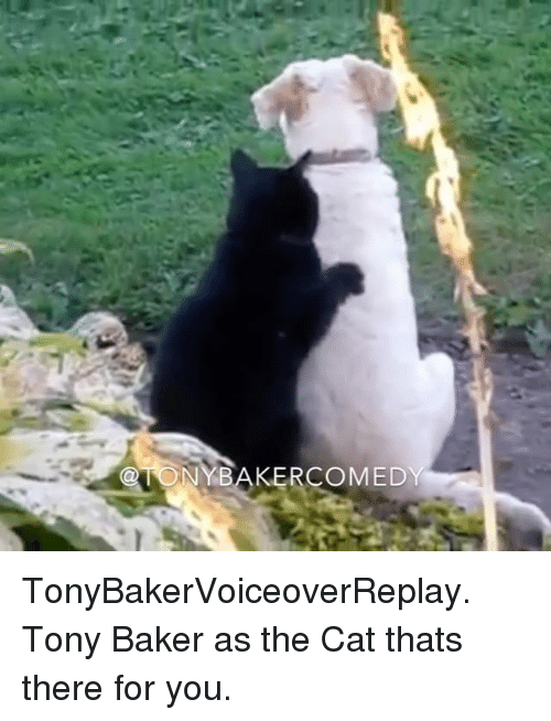 Bakerate: NYBAKERCOMED TonyBakerVoiceoverReplay. Tony Baker as the Cat thats there for you.