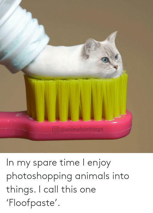 Animals: O@animalsinthings In my spare time I enjoy photoshopping animals into things. I call this one 'Floofpaste'.
