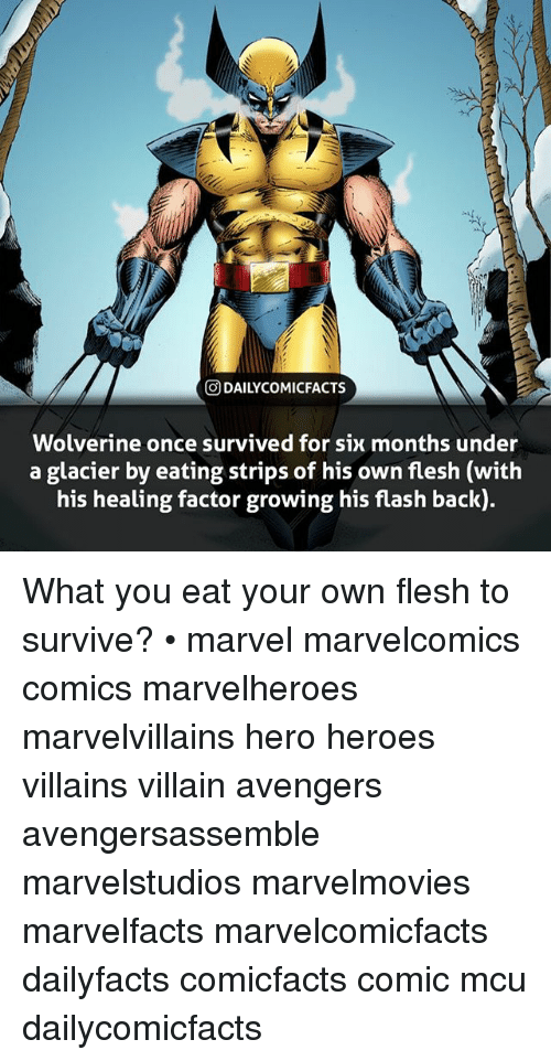 villainizing: O DAILYCOMICFACTS  Wolverine once survived for six months under  a glacier by eating strips of his own flesh (with  his healing factor growing his flash back) What you eat your own flesh to survive? • marvel marvelcomics comics marvelheroes marvelvillains hero heroes villains villain avengers avengersassemble marvelstudios marvelmovies marvelfacts marvelcomicfacts dailyfacts comicfacts comic mcu dailycomicfacts