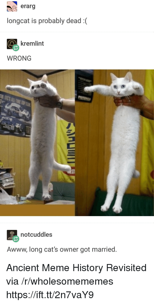Cats, Meme, and History: o erarg  longcat is probably dead:  kremlint  WRONG  notcuddles  Awww, long cat's owner got married. Ancient Meme History Revisited via /r/wholesomememes https://ift.tt/2n7vaY9