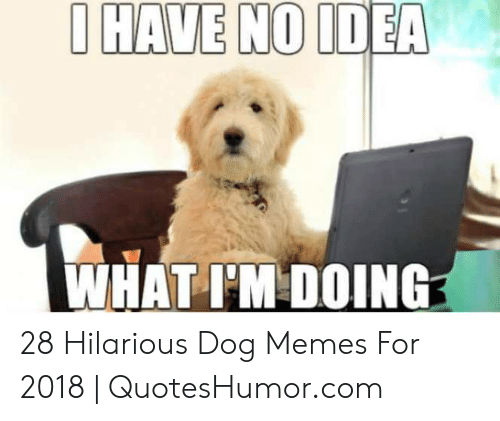 Quoteshumor: O HAVE NO IDEA  WHAT I'M DOING 28 Hilarious Dog Memes For 2018 | QuotesHumor.com