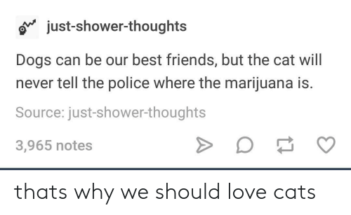 love cats: o just-shower-thoughts  Dogs can be our best friends, but the cat will  never tell the police where the marijuana is.  Source: just-shower-thoughts  3,965 notes thats why we should love cats