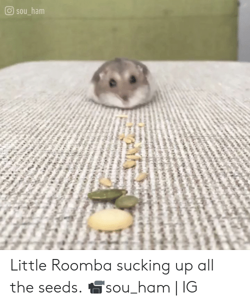 Dank, Roomba, and All The: O sou ham Little Roomba sucking up all the seeds.  📹sou_ham | IG
