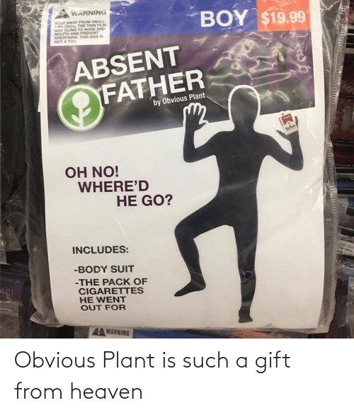 plant: Obvious Plant is such a gift from heaven