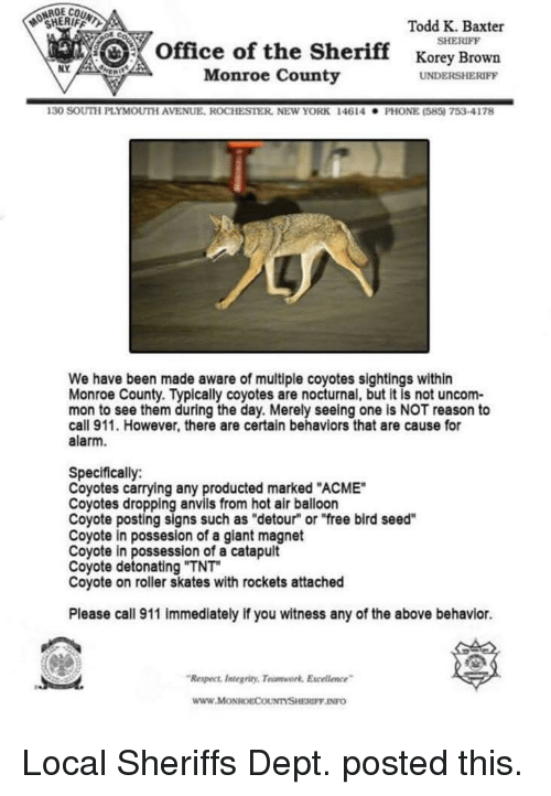 "New York, Phone, and Respect: OCHERIFFL  Todd K. Baxter  SHERIFF  office of the Sherifforey Brown  NY  Monroe County  UNDERSHERIFF  130 SOUTH PLYMOUTİ AVENUE. ROCHESTER, NEw YORK  146 14  . PHONE (585) 753-4178  We have been made aware of multiple coyotes sightings within  Monroe County. Typically coyotes are nocturnal, but it is not uncom-  mon to see them during the day. Merely seeing one is NOT reason to  call 911. However, there are certain behaviors that are cause for  alarm.  Specifically:  Coyotes carrying any producted marked ""ACME""  Coyotes dropping anvils from hot air balloon  Coyote posting signs such as ""detour"" or ""free bird seed""  Coyote in possesion of a giant magnet  Coyote in possession of a catapult  Coyote detonating ""TNT  Coyote on roller skates with rockets attached  Please call 911 immediately if you witness any of the above behavior.  Respect ntegriny, Teumwork Excelence  www.MoONROECOUNTYSHERIFF INFO Local Sheriffs Dept. posted this."