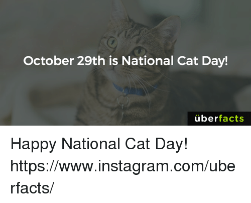 Happy National Cat Day: October 29th is National Cat Day!  uber  facts Happy National Cat Day! https://www.instagram.com/uberfacts/