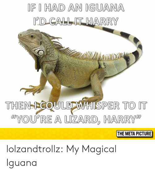 """Tumblr, Blog, and Com: OF I HAD AN IGUANA  D CALLIT HARRY  THEN-ICOULDWHISPER TO IT  YOU'RE A UZARD, HARRY""""  THE META PICTURE lolzandtrollz:  My Magical Iguana"""