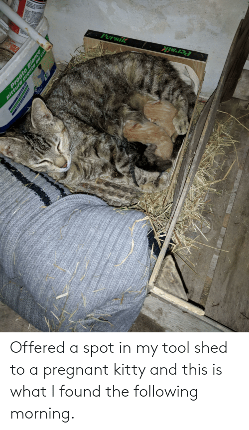 shed: Offered a spot in my tool shed to a pregnant kitty and this is what I found the following morning.