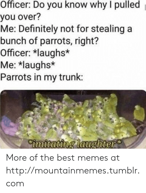 Definitely, Memes, and Tumblr: Officer: Do you know why I pulled  you over?  Me: Definitely not for stealing a  bunch of parrots, right?  Officer: laughs*  Me: *laughs*  Parrots in my trunk:  Cimitating laughter More of the best memes at http://mountainmemes.tumblr.com