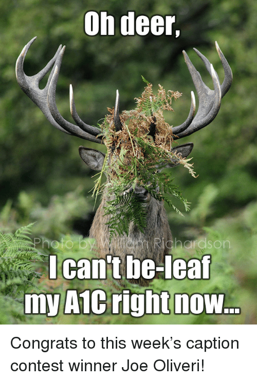 Deer, Joe, and Now: Oh deer,  can't be-leal  myA1C right now <p>  Congrats to this week&rsquo;s caption contest winner Joe Oliveri!  <br/></p>
