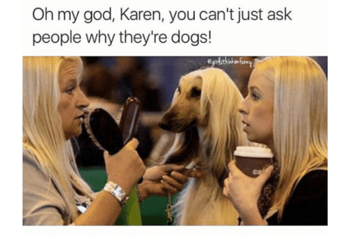 Oh My God Karen You Cant Just Ask People Why Theyre Dogs Dogs