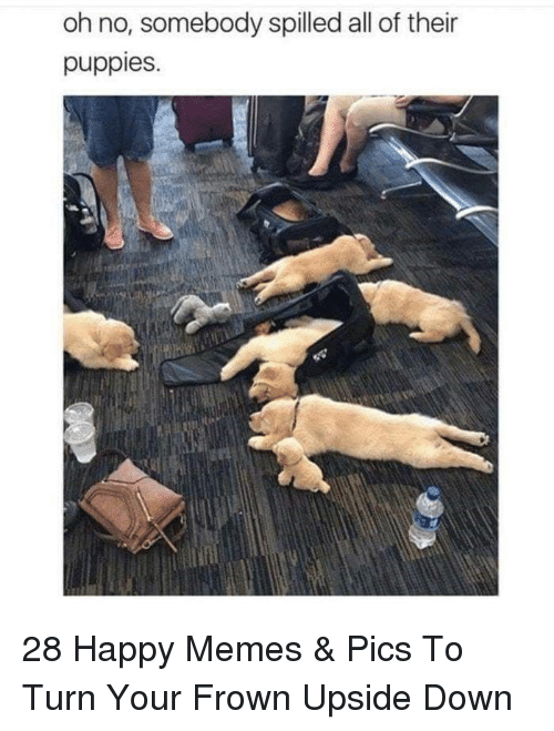 Happy Memes: oh no, somebody spilled all of their  puppies. 28 Happy Memes & Pics To Turn Your Frown Upside Down