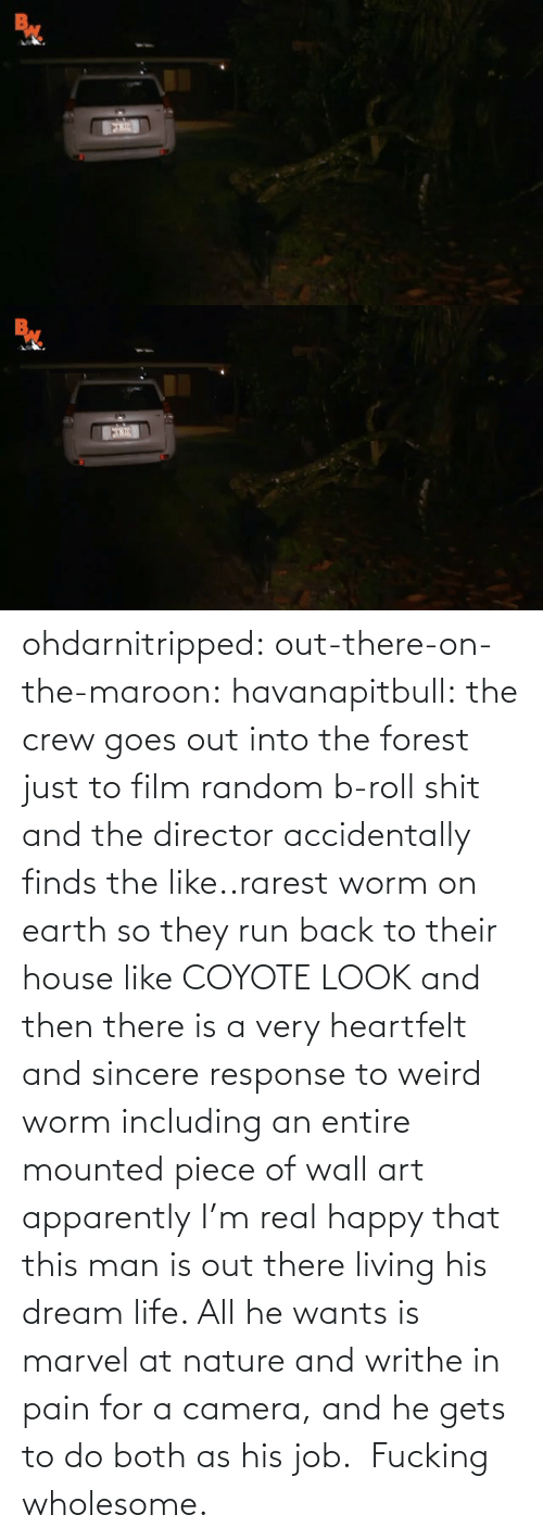 Film: ohdarnitripped:  out-there-on-the-maroon:  havanapitbull: the crew goes out into the forest just to film random b-roll shit and the director accidentally finds the like..rarest worm on earth so they run back to their house like COYOTE LOOK and then there is a very heartfelt and sincere response to weird worm including an entire mounted piece of wall art apparently I'm real happy that this man is out there living his dream life. All he wants is marvel at nature and writhe in pain for a camera, and he gets to do both as his job.    Fucking wholesome.