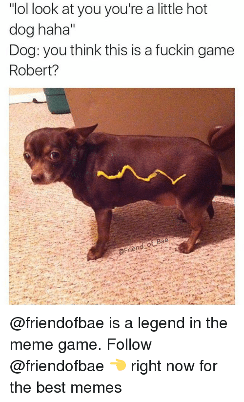 """Meme, Memes, and Best: """"ol look at you you're a little hot  dog haha""""  Dog: you think this is a fuckin game  Robert? @friendofbae is a legend in the meme game. Follow @friendofbae 👈 right now for the best memes"""