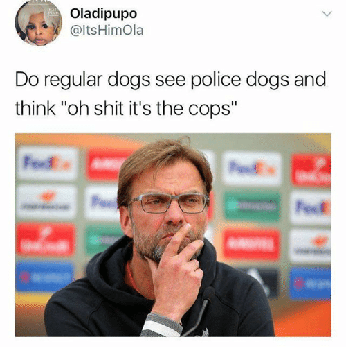 """police dogs: Oladipupo  @ltsHimOla  Do regular dogs see police dogs and  think """"oh shit it's the cops"""""""