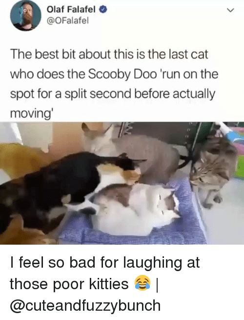 Bad, Kitties, and Memes: Olaf Falafel  @OFalafel  9  The best bit about this is the last cat  who does the Scooby Doo 'run on the  spot for a split second before actually  moving I feel so bad for laughing at those poor kitties 😂 | @cuteandfuzzybunch
