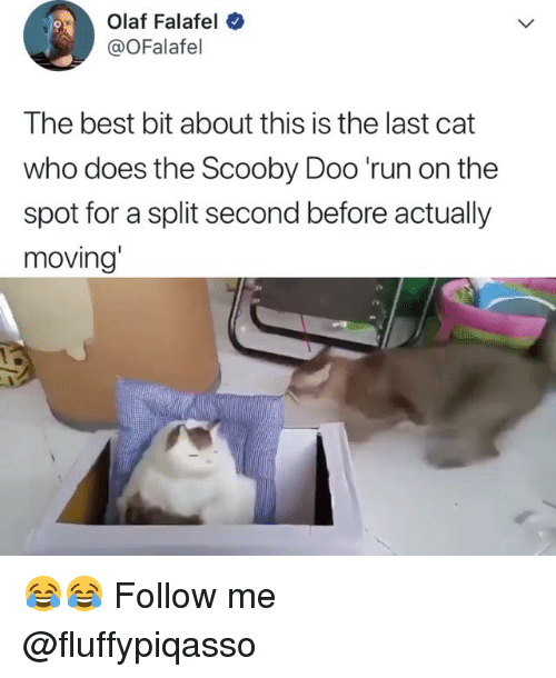 split second: Olaf Falafel  @OFalafel  The best bit about this is the last cat  who does the Scooby Doo 'run on the  spot for a split second before actually  moving' 😂😂 Follow me ➞ @fluffypiqasso