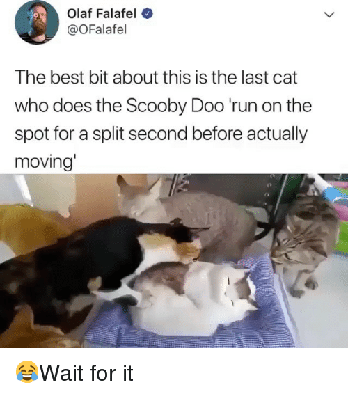Memes, Run, and Scooby Doo: Olaf Falafel  @OFalafel  The best bit about this is the last cat  who does the Scooby Doo 'run on the  spot for a split second before actually  moving' 😂Wait for it