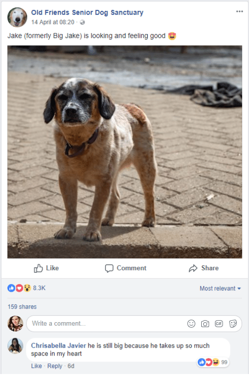 formerly: Old Friends Senior Dog Sanctuary  14 April at 08:20 .  Jake (formerly Big Jake) is looking and feeling good  Like  Comment  Share  Most relevant  159 shares  Write a comment..  Chrisabella Javier he is still big because he takes up so much  space in my heart  Like Reply -6d  0599
