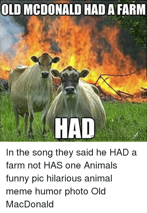 Animals, Funny, and Meme: OLD MCDONALD HAD A FARM  HAD In the song they said he HAD a farm not HAS one Animals funny pic hilarious animal meme humor photo Old MacDonald