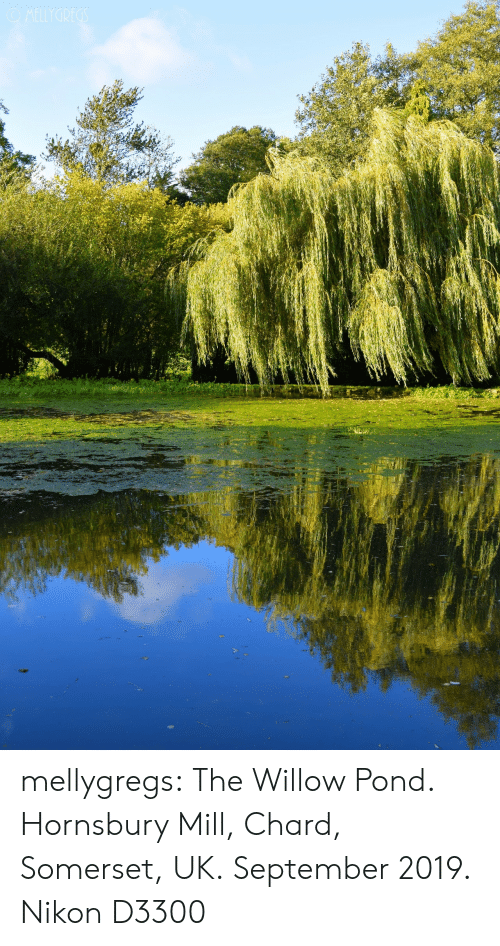 Nikon: OMELLYGREGS mellygregs: The Willow Pond. Hornsbury Mill, Chard, Somerset, UK. September 2019. Nikon D3300