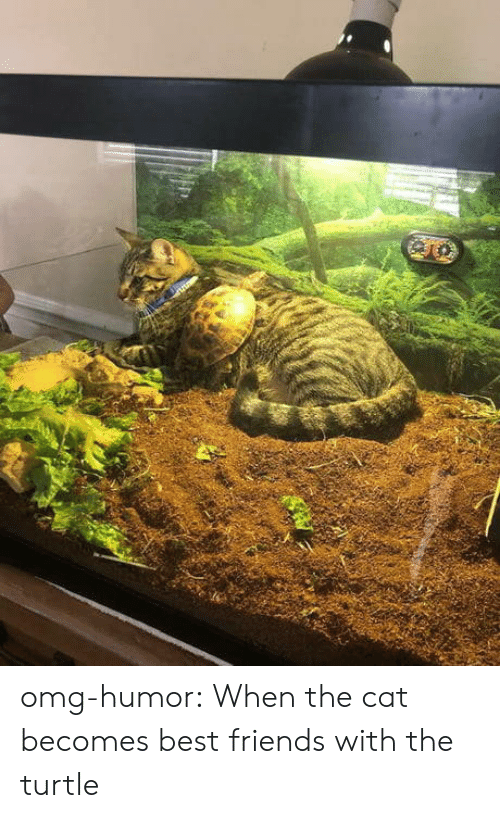 Friends, Omg, and Tumblr: omg-humor:  When the cat becomes best friends with the turtle