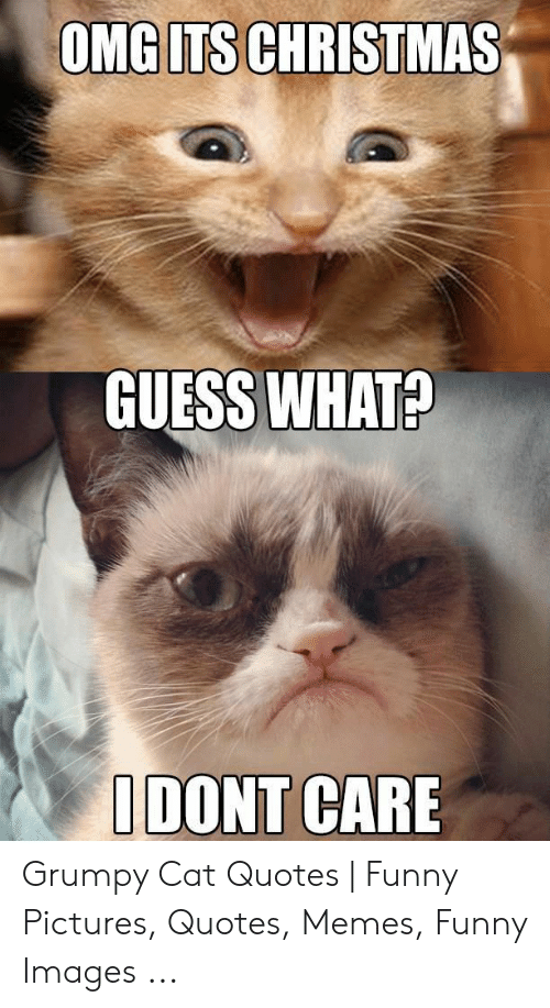 OMG ITS CHRISTMAS GUESS WHAT? I DONT CARE Grumpy Cat Quotes