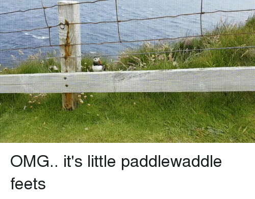 Funny, Omg, and Moment: OMG.. it's little paddlewaddle feets