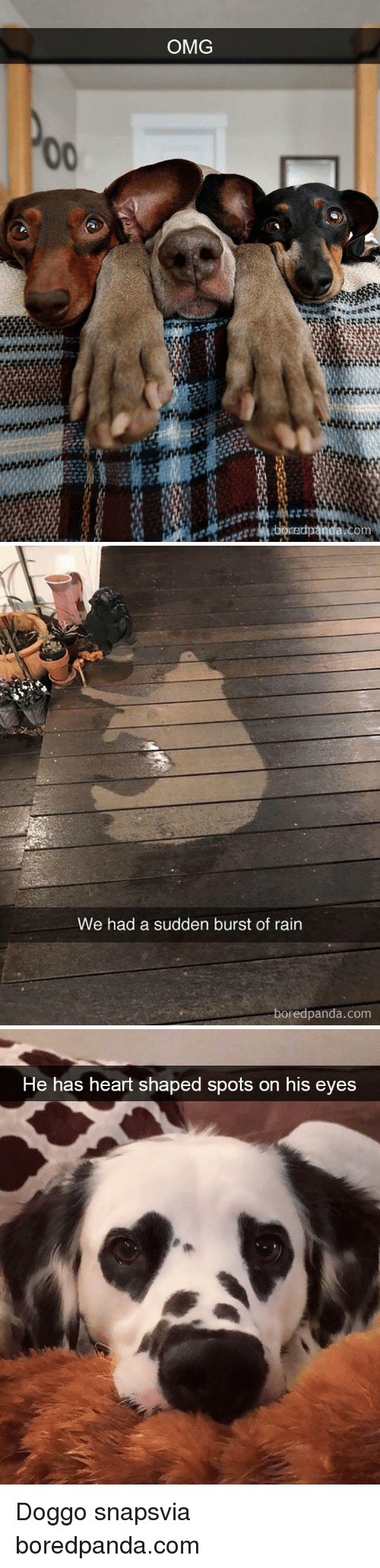 Omg, Heart, and Rain: OMG   We had a sudden burst of rain  boredpanda.com   He has heart shaped spots on his eyes Doggo snapsvia boredpanda.com