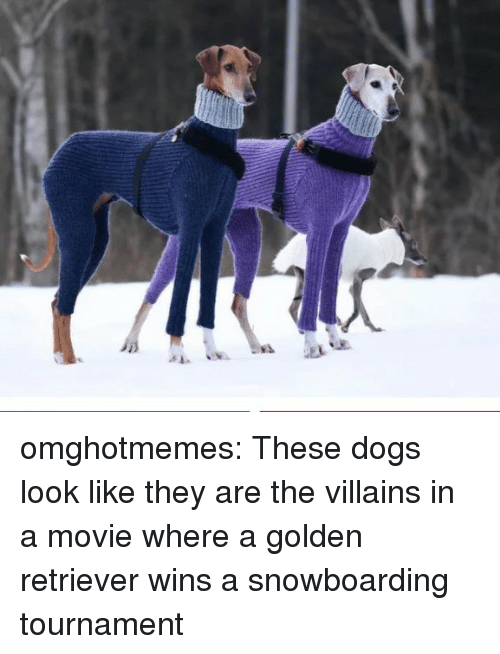 Dogs, Target, and Tumblr: omghotmemes: These dogs look like they are the villains in a movie where a golden retriever wins a snowboarding tournament