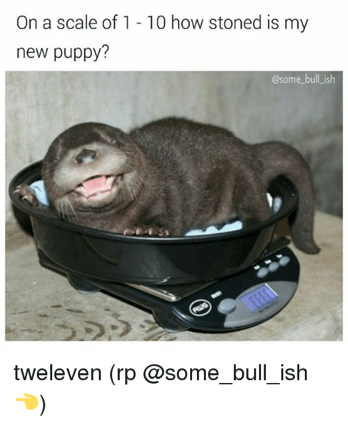 bulling: On a scale of 1 - 10 how stoned is my  new puppy?  @some bull_ish tweleven (rp @some_bull_ish 👈)