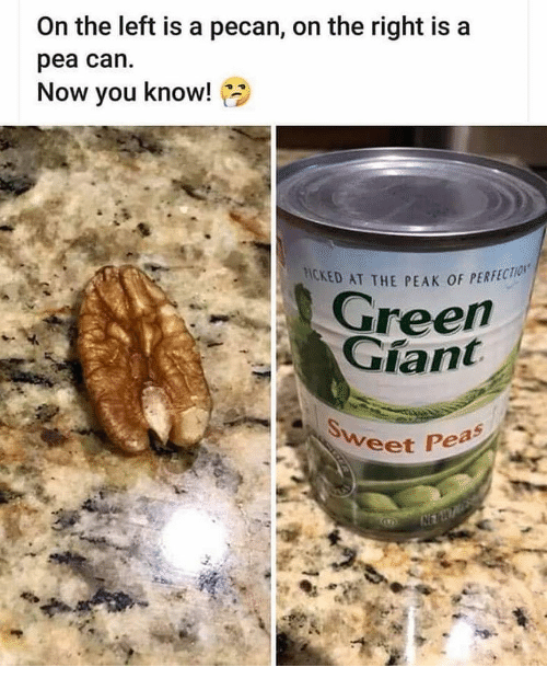 Memes, 🤖, and Can: On the left is a pecan, on the right is a  pea can.  Now you know!  HICKED AT THE PEAK OF PER  PERFECTION  ree  eet Pea
