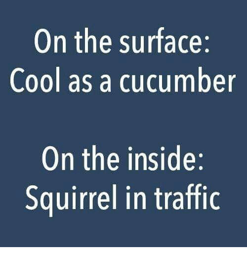 Dank, Traffic, and Cool: On the surface:  Cool as a cucumber  On the inside:  Squirrel in traffic