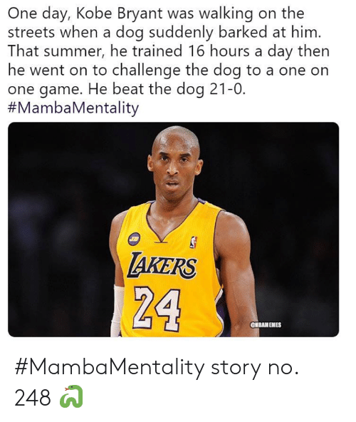 Kobe Bryant, Nba, and Streets: One day, Kobe Bryant was walking on the  streets when a dog suddenly barked at him.  That summer, he trained 16 hours a day then  he went on to challenge the dog to a one on  one game. He beat the dog 21-0.  #MambaMentality  AKERS  24  ONBAMEMES #MambaMentality story no. 248 🐍