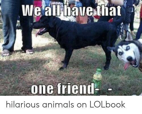 Hilarious Animals: one friend hilarious animals on LOLbook