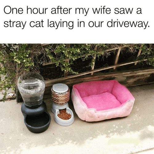 Memes, Wife, and 🤖: One hour after my wife sawa  stray cat laying in our driveway