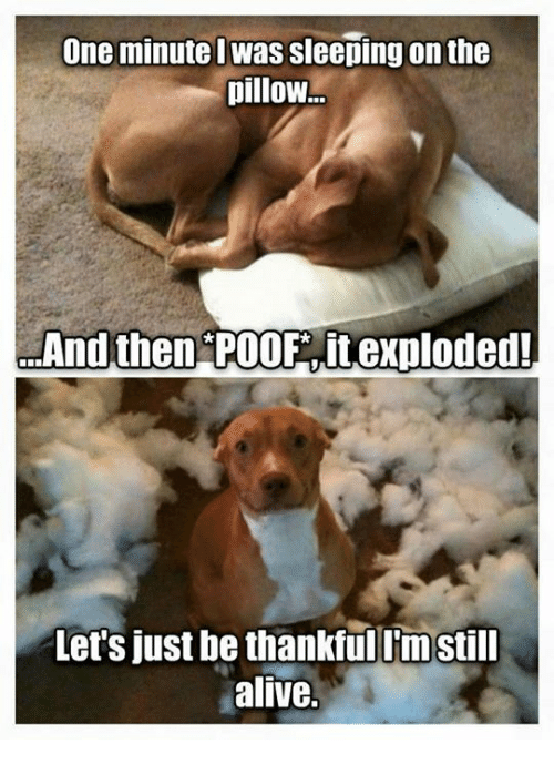 Poofes: one minutel was sleeping on the  pillow  And then POOF itexploded!  Let's just be thankfulimstill  alive.
