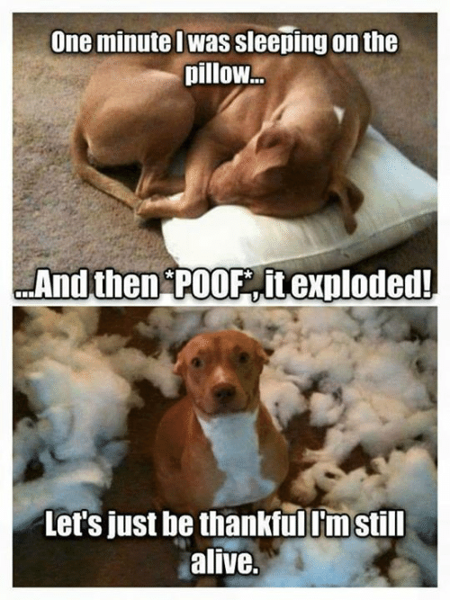 poof: One minutel was sleeping on the  pillow  And then POOF it exploded  Let's just he thankfuil'mstill  alive.