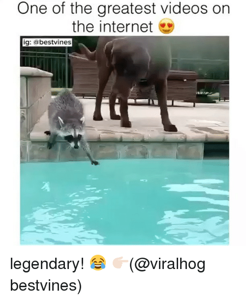 The Internets: One of the greatest videos on  the internet  ig: @bestvines legendary! 😂 👉🏻(@viralhog bestvines)