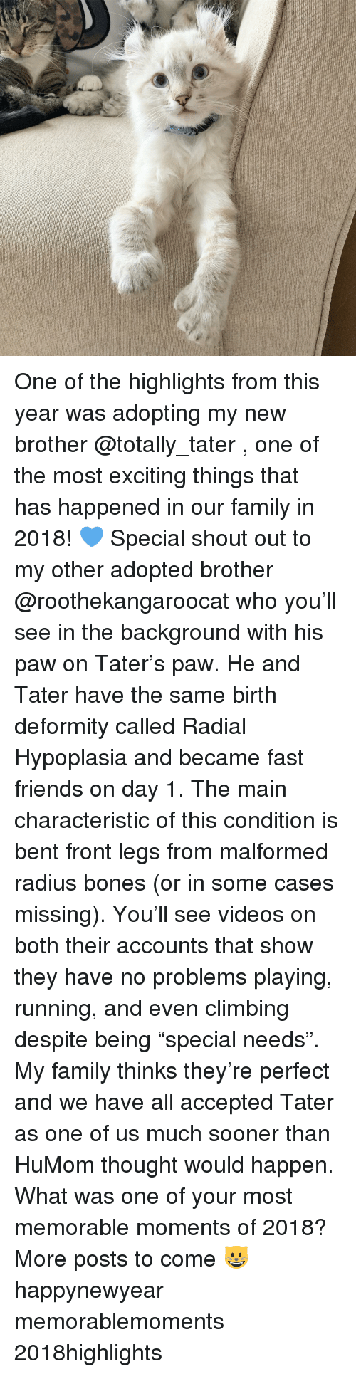 """no problems: One of the highlights from this year was adopting my new brother @totally_tater , one of the most exciting things that has happened in our family in 2018! 💙 Special shout out to my other adopted brother @roothekangaroocat who you'll see in the background with his paw on Tater's paw. He and Tater have the same birth deformity called Radial Hypoplasia and became fast friends on day 1. The main characteristic of this condition is bent front legs from malformed radius bones (or in some cases missing). You'll see videos on both their accounts that show they have no problems playing, running, and even climbing despite being """"special needs"""". My family thinks they're perfect and we have all accepted Tater as one of us much sooner than HuMom thought would happen. What was one of your most memorable moments of 2018? More posts to come 😺 happynewyear memorablemoments 2018highlights"""