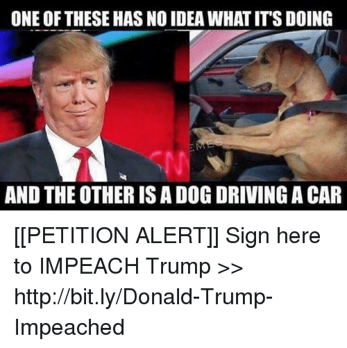 and the others: ONE OF THESE HAS NO IDEA WHAT IT'S DOING  AND THE OTHER IS A DOG DRIVING A CAR [[PETITION ALERT]] Sign here to IMPEACH Trump >> http://bit.ly/Donald-Trump-Impeached