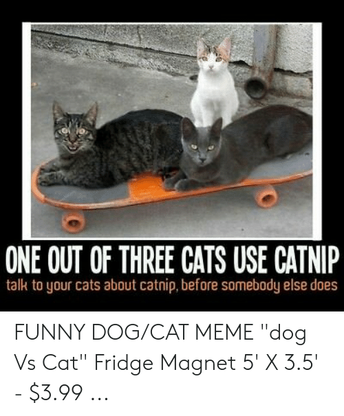 Funny Cat Meme Crazy Cat Lady Fridge Magnet 5 X 3 5 Magnets Cats Collectibles