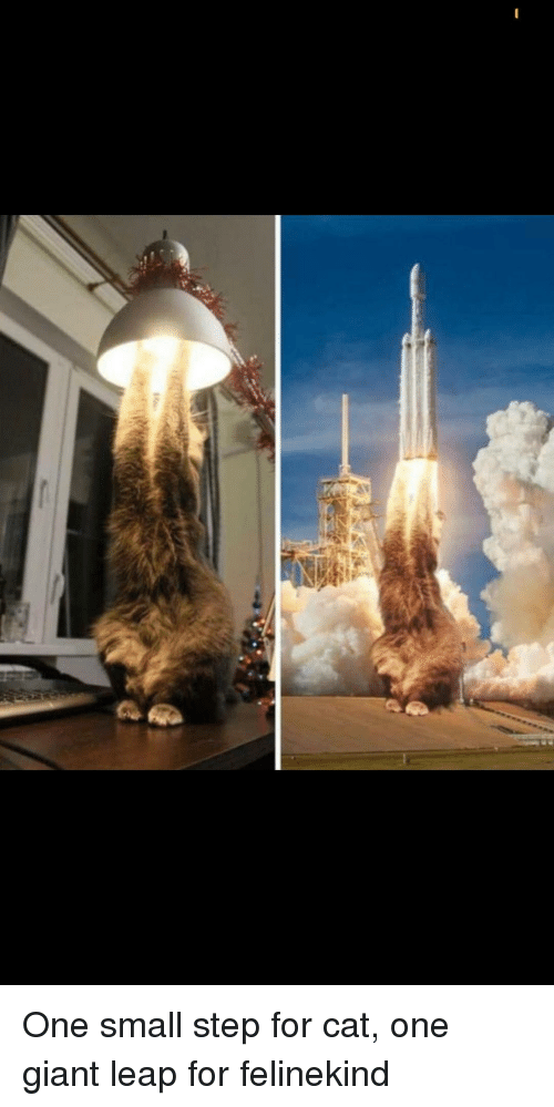 Giant, Cat, and Step: One small step for cat, one giant leap for felinekind