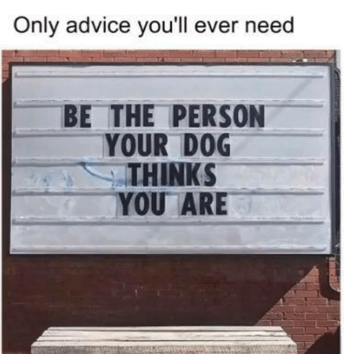 Advice, Dank, and 🤖: Only advice you'll ever need  BE THE PERSON  YOUR D0G  THINKS  YOU ARE
