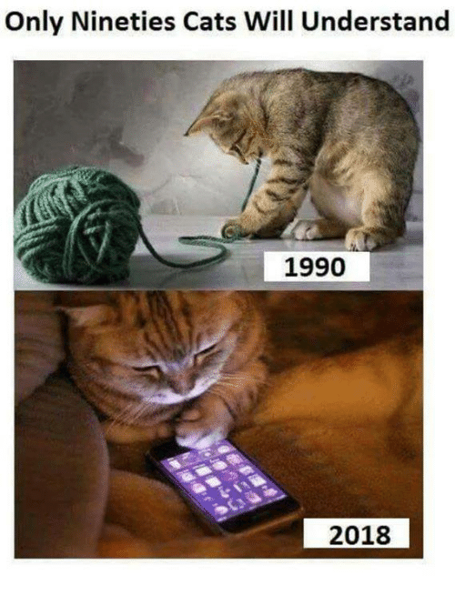 Cats, Memes, and 🤖: Only Nineties Cats Will Understand  1990  2018
