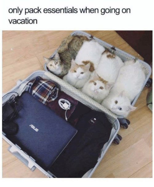 Memes, Vacation, and 🤖: only pack essentials when going on  vacation